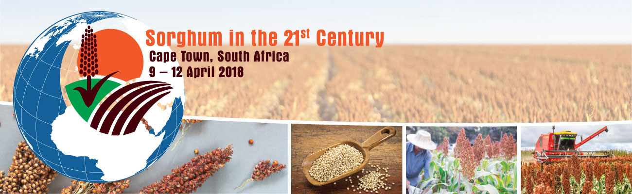Sorghum in the 21st Century